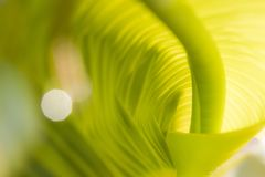 Grünes verdrehtes Blatt stockfotos