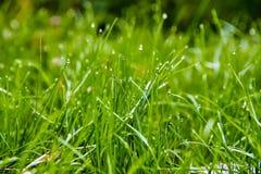 Grünes wachsendes Gras Lizenzfreie Stockfotos