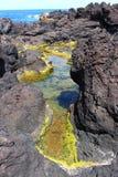 Grünes Wachstum in einem vulkanischen Gezeiten- Pool Stockbilder