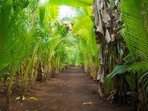 Grünes walkpath Lizenzfreie Stockfotografie