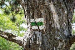Grünes wanderndes Zeichen auf dem Baum Lizenzfreie Stockbilder