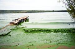grünes Wasser Lizenzfreies Stockfoto