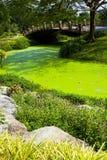 Grünes Wasser im Park stockfotos