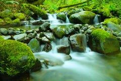 Grünes Wasser und Moos Lizenzfreies Stockfoto