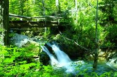 Grünes Wasser und Moos Lizenzfreie Stockfotos