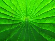 Grünes Web Lizenzfreie Stockfotografie