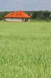 Grünes Weizenfeld mit einem Haus Lizenzfreie Stockfotos