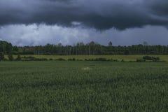 Grünes Weizenfeld mit Wald im Hintergrund an einem bewölkten Tag Stockbild