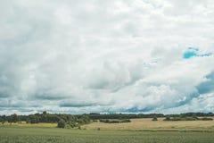 Grünes Weizenfeld mit Wald im Hintergrund an einem bewölkten Tag Lizenzfreies Stockfoto