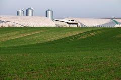 Grünes Weizenfeld und -bauernhof Stockbilder