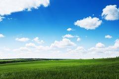 Grünes Weizenfeld und bewölkter Himmel, Landwirtschaftsszene Stockfoto