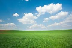 Grünes Weizenfeld und blauer Himmel Lizenzfreie Stockbilder