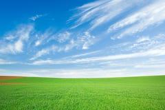 Grünes Weizenfeld und blauer Himmel mit Federwolke lizenzfreies stockbild