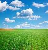 Grünes Weizenfeld und blauer Himmel mit Kumulus stockfotos