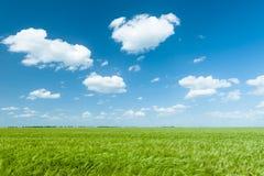 Grünes Weizenfeld und Landschaft des blauen Himmels Lizenzfreie Stockfotos
