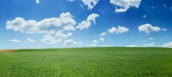 Grünes Weizenfeld und Panorama des blauen Himmels Lizenzfreie Stockbilder