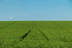 Grünes Weizenfeldtageslandwirtschaftsland mit tracktor verfolgt lizenzfreie stockfotos