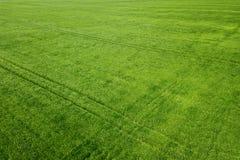 Grünes Weizenvon der luftfeld Großes grünes Feld der Vogelperspektive Stockbild