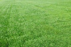 Grünes Weizenvon der luftfeld Großes grünes Feld der Vogelperspektive Lizenzfreie Stockbilder