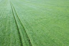 Grünes Weizenvon der luftfeld Großes grünes Feld der Vogelperspektive Lizenzfreie Stockfotos