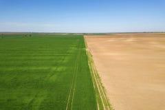 Grünes Weizenvon der luftfeld Großes grünes Feld der Vogelperspektive Stockfoto