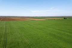 Grünes Weizenvon der luftfeld Großes grünes Feld der Vogelperspektive Stockfotografie