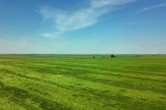 Grünes Weizenvon der luftfeld Großes grünes Feld der Vogelperspektive Lizenzfreie Stockfotografie