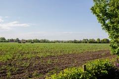 Grünes Wiesenbauernhoffeld im Frühjahr, landwirtschaftlich mit der Traktorlandwirtschaft stockbild