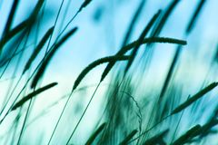 Grünes wildes Gras Lizenzfreies Stockfoto