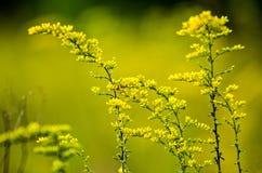 Grünes wildes Gras auf einem Waldwiesenmakrobild mit flachem dep Stockfotos