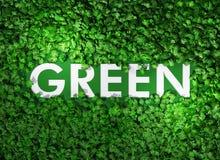 Grünes Wort unter dem Gras vektor abbildung