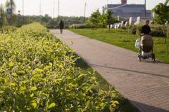 Grünes Yard Stockfoto