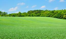 Grünfelder Stockfoto