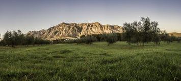 Grünfelder in Montserrat Stockbilder