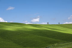 Grünfelder und blauer Himmel, Toskana, Italien Stockfoto