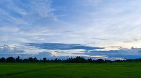 Grünfelder und der blaue Himmel Stockfotos
