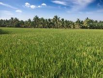 Grünfelder und -hügel Indien lizenzfreie stockfotografie