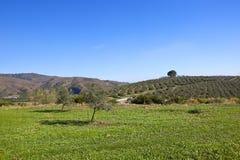 Grünfelder und Olivenhaine von Andalusien Lizenzfreies Stockbild
