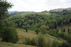 Grünfelder und -wälder Lizenzfreies Stockbild