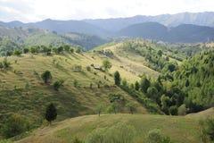 Grünfelder und -wälder Lizenzfreies Stockfoto