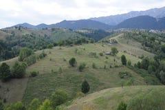 Grünfelder und -wälder stockbild