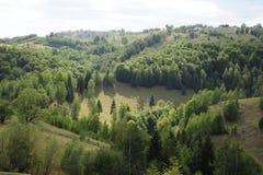 Grünfelder und -wälder stockfotos