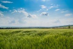 Grünfelder unter dem blauen Himmel Stockbild