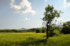 Grünfelder von Serbien Stockbilder