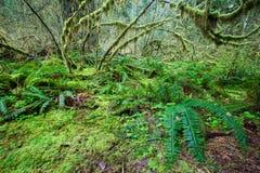 Grünlicher Wald und frern Lizenzfreie Stockbilder