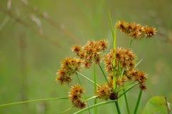 Grünliches Gras 2 Stockfoto