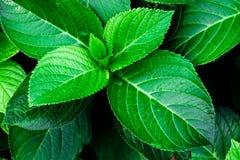 Grünpflanze Stockbild