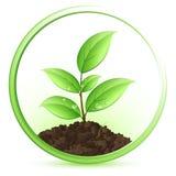 Grünpflanze lizenzfreie abbildung