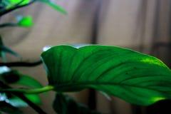 Grünpflanze 4 Stockbild