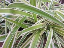 Grünpflanze außer Rand und Band geraten Lizenzfreie Stockbilder